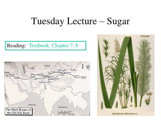 Tuesday Lecture   Sugar