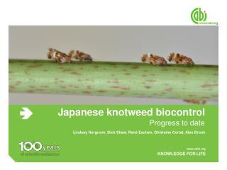 Japanese knotweed biocontrol
