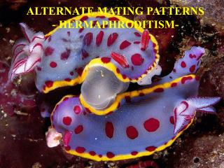 ALTERNATE MATING PATTERNS - HERMAPHRODITISM-