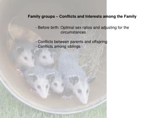 Family groups   Conflicts and Interests among the Family