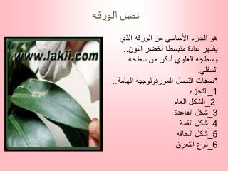 1 simple leaves         ..
