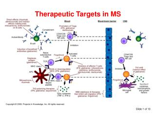 Therapeutic Targets in MS