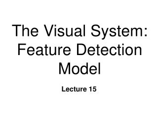 The Visual System: Feature Detection Model