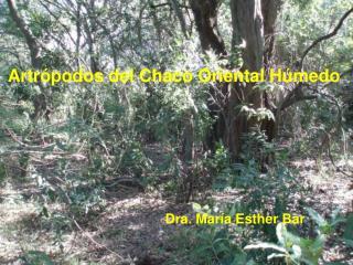 Artr podos del Chaco Oriental H medo