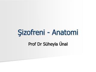 Sizofreni - Anatomi