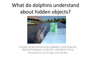 What do dolphins understand about hidden objects
