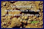 Germinaci n y multiplicaci n in vitro  de cactus piedra Lithops spp.