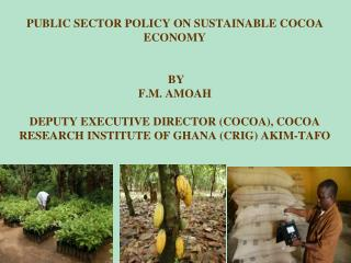 PUBLIC SECTOR POLICY ON SUSTAINABLE COCOA ECONOMY    BY   F.M. AMOAH  DEPUTY EXECUTIVE DIRECTOR COCOA, COCOA RESEARCH IN