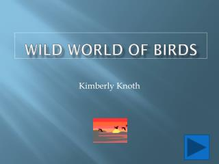 Wild World of Birds