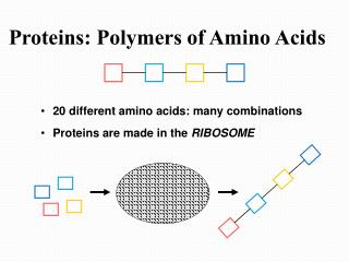 Proteins: Polymers of Amino Acids