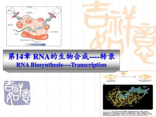 14 RNA---- RNA Biosynthesis----Transcription