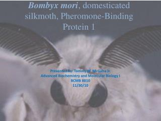 Bombyx mori, domesticated silkmoth, Pheromone-Binding Protein 1