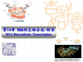 14 RNA- RNA Biosynthesis--Transcription