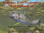 Kennebec River Diadromous Fish Restoration