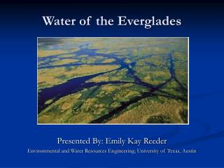 Water of the Everglades