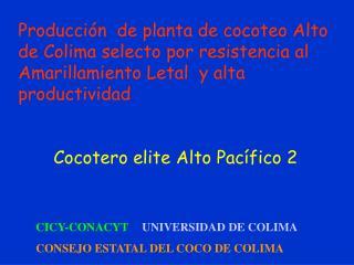 Producci n  de planta de cocoteo Alto de Colima selecto por resistencia al Amarillamiento Letal  y alta productividad
