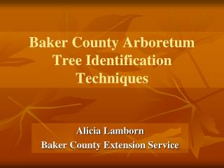 Baker County Arboretum Tree Identification  Techniques