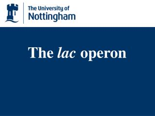 The lac operon