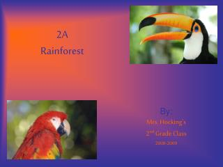 2A  Rainforest