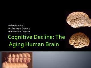 Cognitive Decline: The  Aging Human Brain