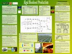 Algal Biodiesel Production