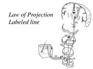 Law of Projection Labeled line