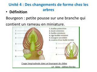 Unit  4 : Des changements de forme chez les arbres