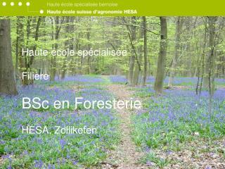 Haute  cole sp cialis e   Fili re  BSc en Foresterie  HESA, Zollikofen