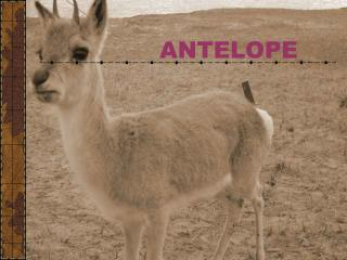 PROTECT THE ANTELOPE