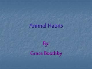 Animal Habits