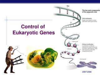 Control of  Eukaryotic Genes