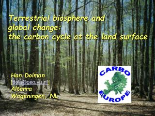 Terrestrial biosphere and  global change:  the carbon cycle at the land surface