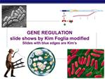 GENE REGULATION slide shows by Kim Foglia modified Slides with blue edges are Kim s