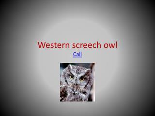 Western screech owl Call