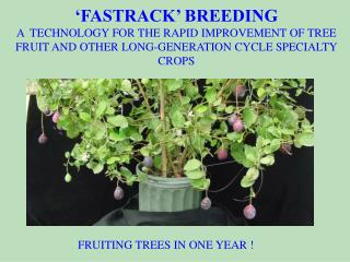 A novel technology for speeding the improvement of germplasm and varieties of tree fruits and other long-generation cycl