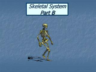 Skeletal System Part B