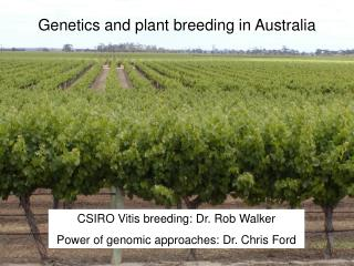 Genetics and plant breeding in Australia