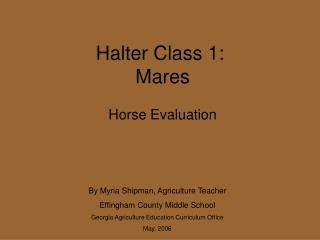 Halter Class 1:   Mares