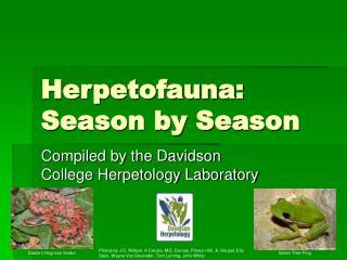 Herpetofauna: Season by Season