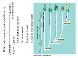 Relative dominance in major plant lineages