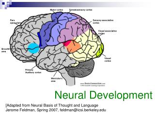 [Adapted from Neural Basis of Thought and Language  Jerome Feldman, Spring 2007, feldmanicsi.berkeley