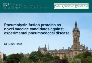 Pneumolysin fusion proteins as novel vaccine candidates against experimental pneumococcal disease