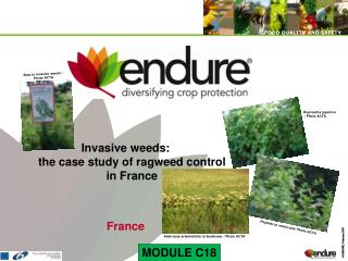 Invasive weeds: the case study of ragweed control  in France   France