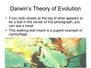 Darwin s Theory of Evolution