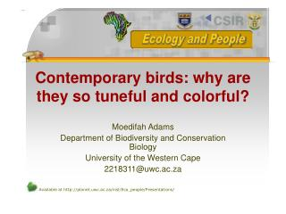 Contemporary birds: why are they so tuneful and colorful