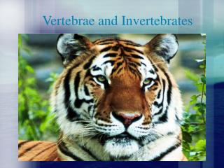 Vertebrae and Invertebrates