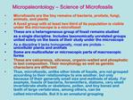 Micropaleontology   Science of Microfossils
