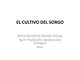 EL CULTIVO DEL SORGO