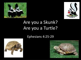 Are you a Skunk Are you a Turtle