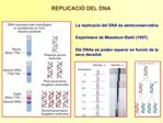 La replicaci  del DNA  s semiconservativa